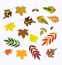 set of fall rowan viburnum oak betula green vector image