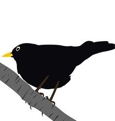 Blackbird on a branch vector image
