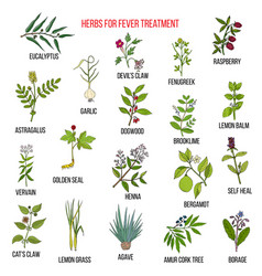 best herbal remedies for fever vector image