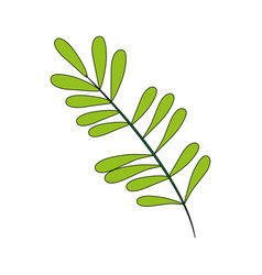 color image branch with ovals leaves vector image