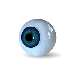 Eye ball isolated on white background vector image vector image