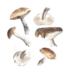 Lovely autumn mushrooms vector