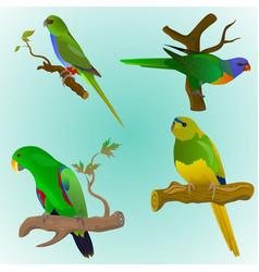Set of four colorful parrots vector