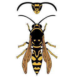 Wasp is yellow orange and black graphics vector