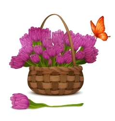 Tulip flowers in basket vector image