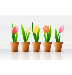 Tulip flowers vector image vector image