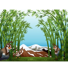 Birds at the bamboo forest vector image