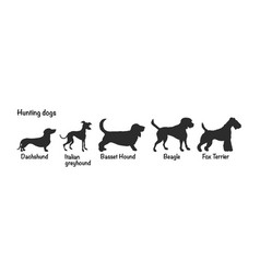 Silhouettes 5 hunting dog breeds vector