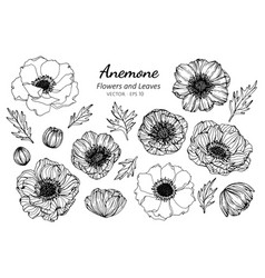 Collection set of anemone flower and leaves vector