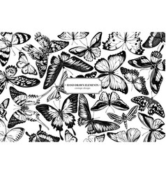 Design with black and white papilio ulysses vector