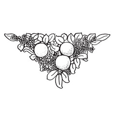 Fruit tailpiece decorated with leaves and flowers vector