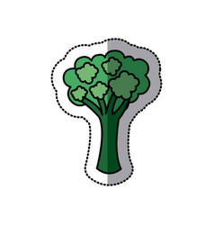 color vegetable broccoli icon vector image
