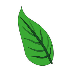 color image green leaf with ramifications vector image vector image