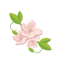 Sakura flower with leaves vector image vector image