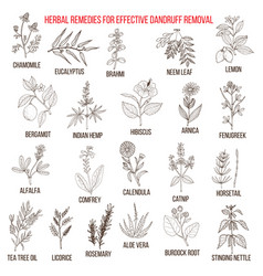 Best herbal remedies for effective dandruff vector
