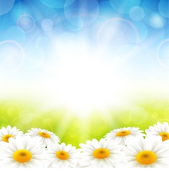 flowers on summer background vector image