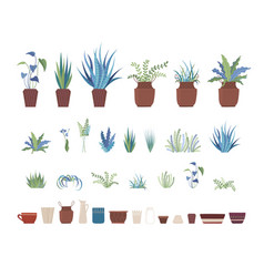 home plants and clay pots flat set vector image