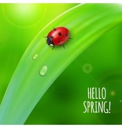 Ladybug on green grass vector