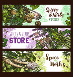 Spices and herbs farm store banners vector