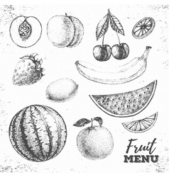 Vintage set of fresh fruits sketch vector image