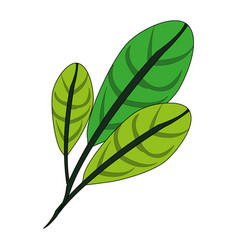 color image green leaves with ramifications vector image