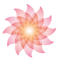 beautiful pink lotus flower icon vector image