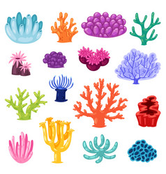 Coral sea coralline or exotic cooralreef vector