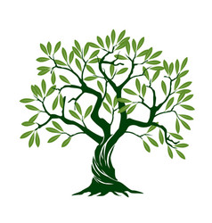 Olive tree on white background and vector