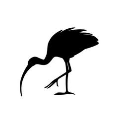 black silhouette american white ibis flat cartoon vector image