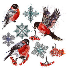 Collection of bullfinch birds snowflakes and rowan vector