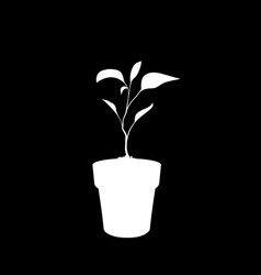 white silhouette of sprouting plant in the pot vector image