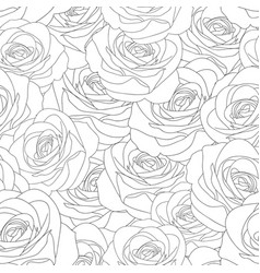Beautiful rose - rosa outline seamless background vector