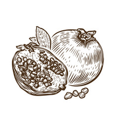 Hand drawn pomegranate fruit food sketch vector