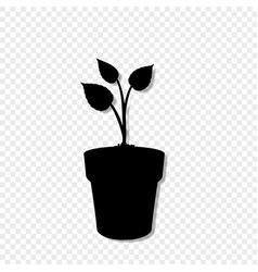 seeding plant icon sign template for design vector image