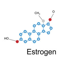 the formula of estrogen vector image