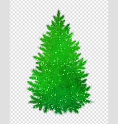 christmas green spruce tree vector image