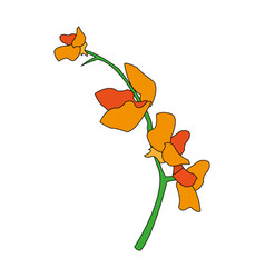 Color image flower exotic orchid branch vector