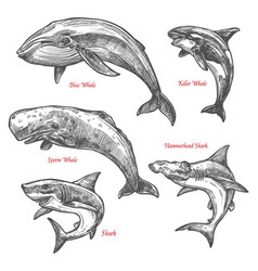Giant sea animals shark whales sketch icons vector