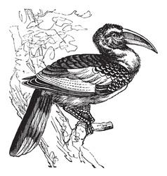 Hornbill bird vintage engraving vector