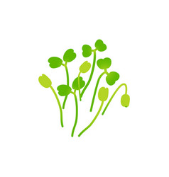 Microgreens arugula bunch of plants white vector