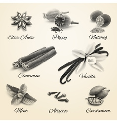 Spices set black and white vector image