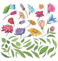 Spring Flowers and Leaves Set vector image