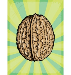 background with walnut vector image