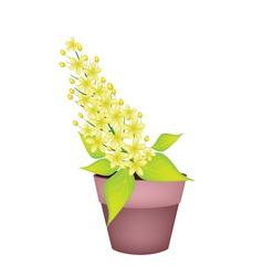 Cassia Fistula Flower in A Ceramic Pot vector image