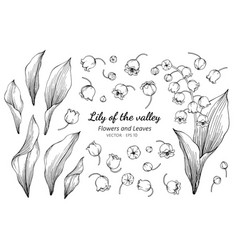 collection set of lily of the valley flower and vector image