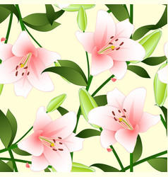 lilium candidum the madonna lily or pink lily on vector image vector image