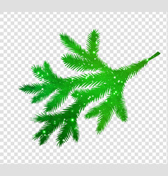 spruce branch silhouette vector image vector image