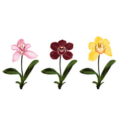 collection colorful orchid flowers vector image