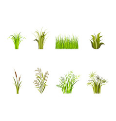 green grass set decor elements isolated on a white vector image