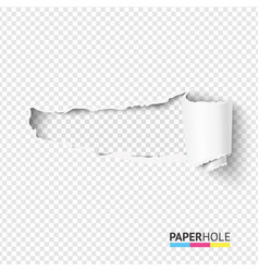 Half blank torn paper pieces scroll with vector